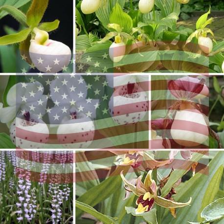 Assortiment Américain - Kit commémorant Independance Day