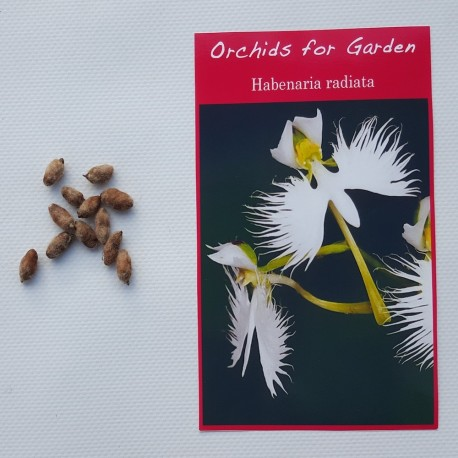 3 bulbes - Habenaria radiata - Orchidée Colombe