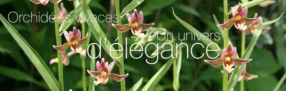 Invitez des orchidées dans votre jardin… - Phytesia