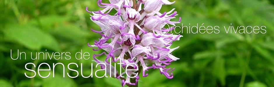 Orchis-simia.jpg