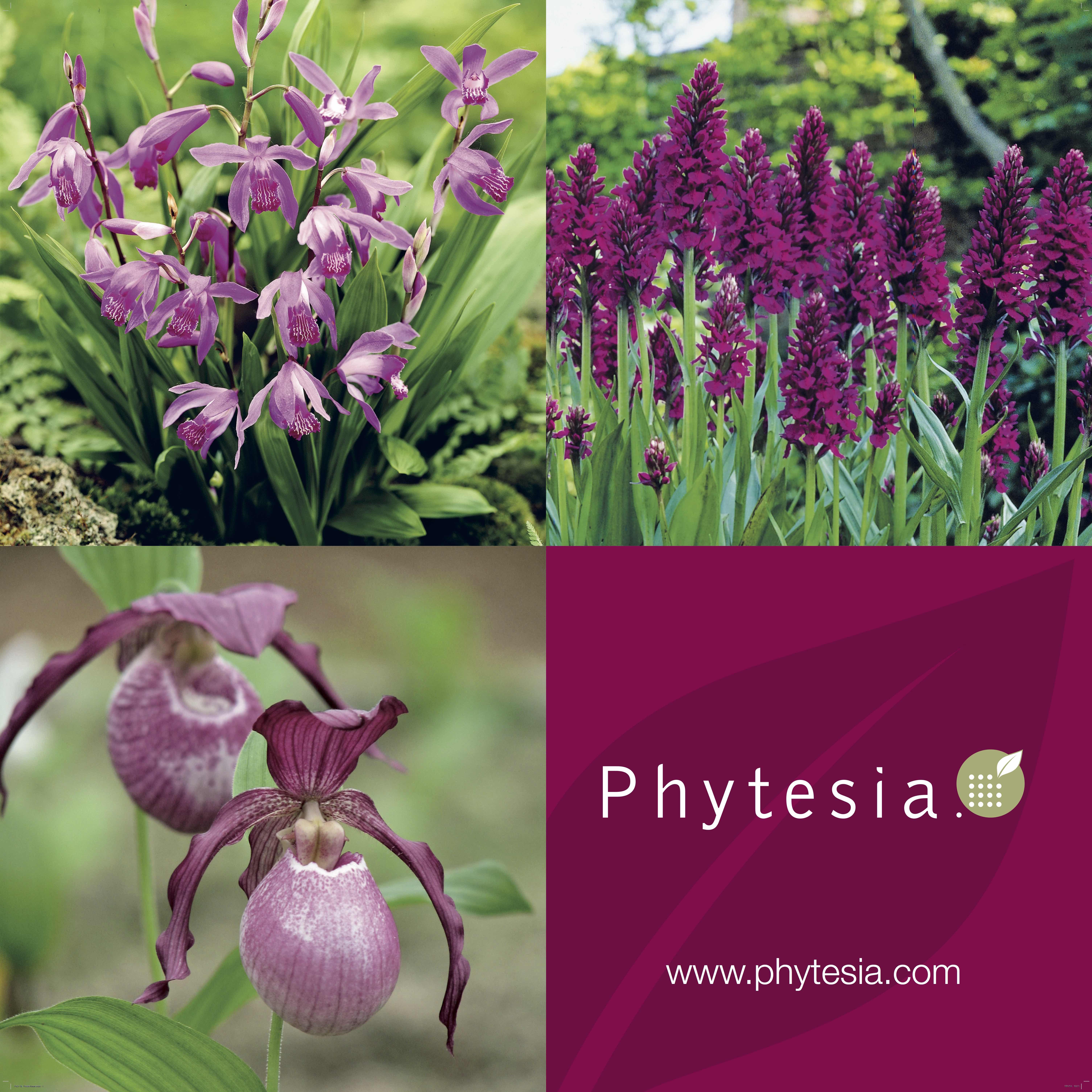 Invitez des orchidées dans votre jardin…